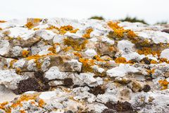 Lichens on limestone cliff Stock Photos