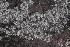 Lichens and moss covering granite rock surface Royalty Free Stock Image