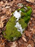 Lichens and mosses on a northern woodland boulder stock photo