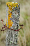 Lichens on an old fence post Stock Images