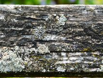 Lichens on an old wooden fence royalty free stock images
