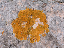 Lichens on the rock Stock Photo