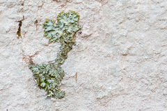Lichens on rock. Stock Photography