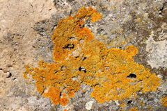 Lichens on rock Stock Photography