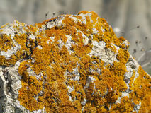 Lichens on rocks Royalty Free Stock Photography