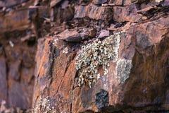 Lichens s'élevant sur la roche jurassique dans Mt Diablo State Park images stock