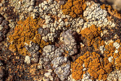 Lichens on a stone. Stock Photo