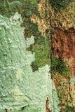 Lichens sur le tronc d'arbre Images stock