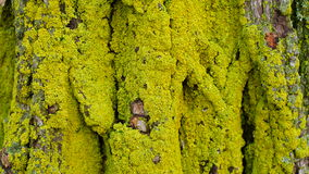 Lichens sur un arbre Photo stock