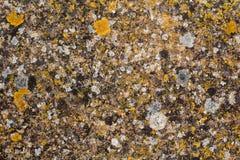 Lichens sur un mur de briques Photographie stock