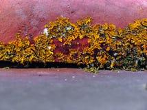 Lichens sur une tuile de toit Images libres de droits