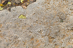 Lichens are symbiotic fungi and algae. They are able to grow on the rocks clean and often form on the rocks and stones beautiful patterns  Lichen on a green Stock Photos