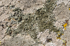 Lichens are symbiotic fungi and algae. They are able to grow on the rocks clean and often form on the rocks and stones beautiful patterns  Lichen on a green Stock Image