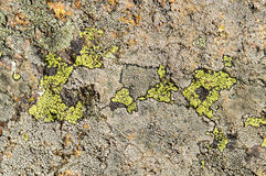Lichens are symbiotic fungi and algae. They are able to grow on the rocks clean and often form on the rocks and stones beautiful patterns  Lichen on a green Stock Photo