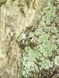 Lichens on trees Stock Photos