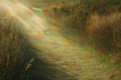 Licht aan mijn Weg Royalty-vrije Stock Afbeelding