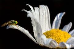 Licht als bloemblaadje Royalty-vrije Stock Afbeelding