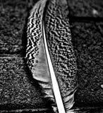 Licht als vogel royalty-vrije stock foto