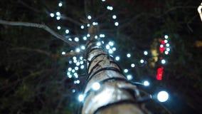 Licht am Baum lizenzfreies stockbild
