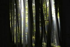 Licht in bos Stock Afbeeldingen