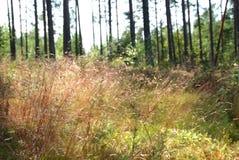 Licht in Bos en Gras Royalty-vrije Stock Afbeeldingen