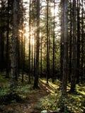 Licht in de bossen Royalty-vrije Stock Afbeelding