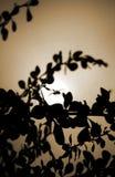 Licht in de jagersogen stock fotografie