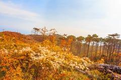 Licht der Herbstsonne Lizenzfreies Stockbild