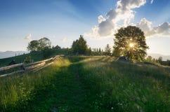 Licht der Sonne durch die Bäume Stockfotografie