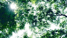 Licht der Sonne von den Bäumen stock video