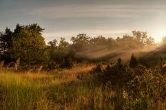 Licht des aufgehende Sonne über der Wiese Lizenzfreies Stockfoto