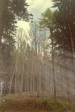 Licht des Herbstes Stockfotografie