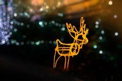 Licht des Rens mit unscharfem Hintergrund stockbild