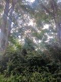 Licht door bomen Stock Fotografie