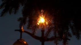 Licht door de nette takken stock videobeelden
