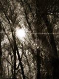 Licht door Duisternis Royalty-vrije Stock Foto's