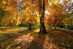 Licht door een boom Royalty-vrije Stock Foto