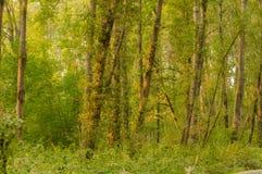 Licht durch Baumbruch lizenzfreie stockfotografie