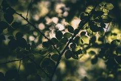 Licht durch das Laub stockbild