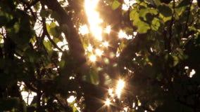 Licht durch Niederlassungen stock video