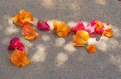 Licht en schaduw op een stoep met bloemen Stock Fotografie