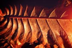 Licht en schaduwtextuur van bruine droge bladeren Stock Fotografie