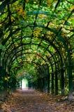 Licht am Ende des Naturtunnels Stockbild