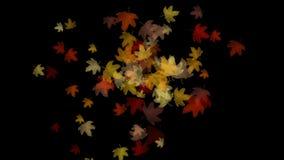 Licht falling&flare Urlaub des Ahornblattes 4k, romantischer Partikel des Herbstfalles künstlerisch stock video