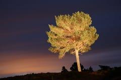 Licht gemalter Baum in den schottischen Hochländern Stockfotografie