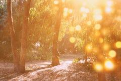 Licht gesprengt unter Bäumen, blured Hintergrund stockbild