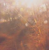 Licht gesprengt unter Wiesenbäumen stockfotografie