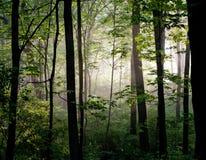 Licht in het Bos royalty-vrije stock fotografie