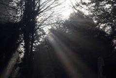 Licht III van de boom stock foto