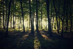 Licht im Wald Stockbild